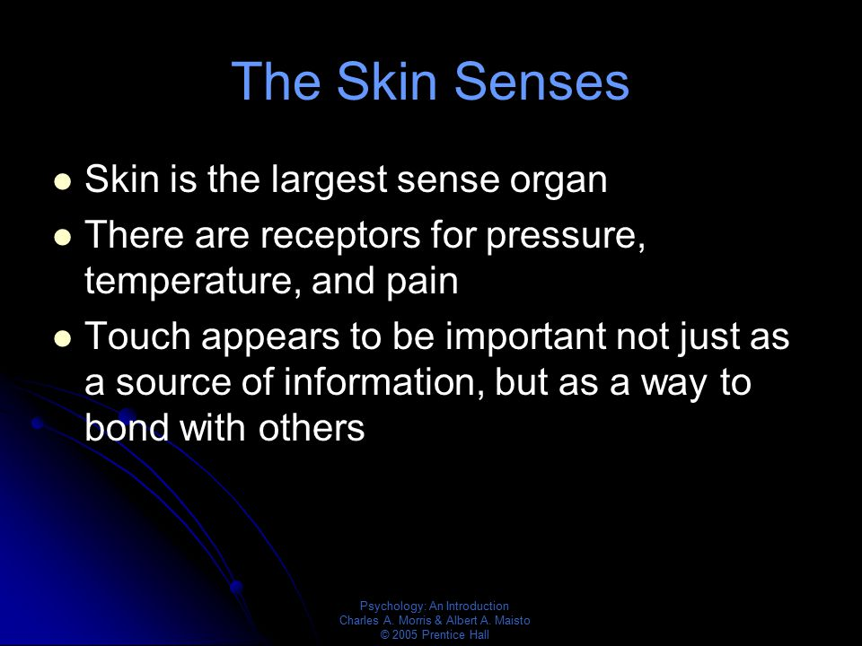 The Skin Senses Skin is the largest sense organ