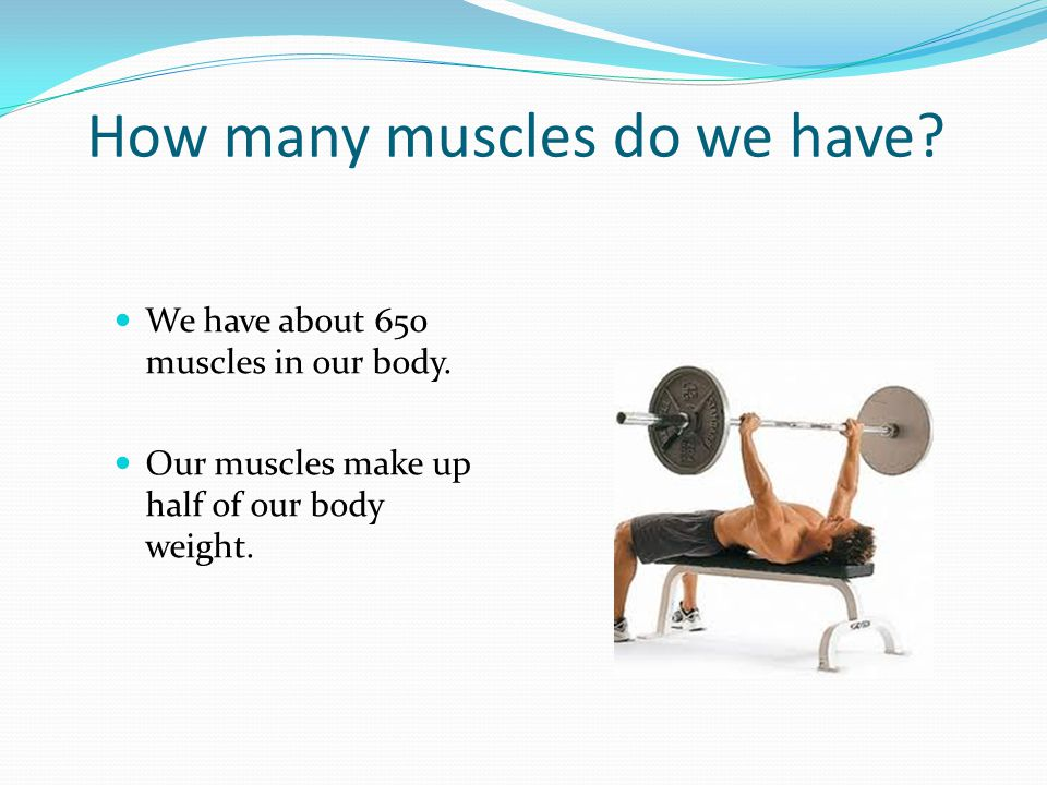 How many muscles do we have