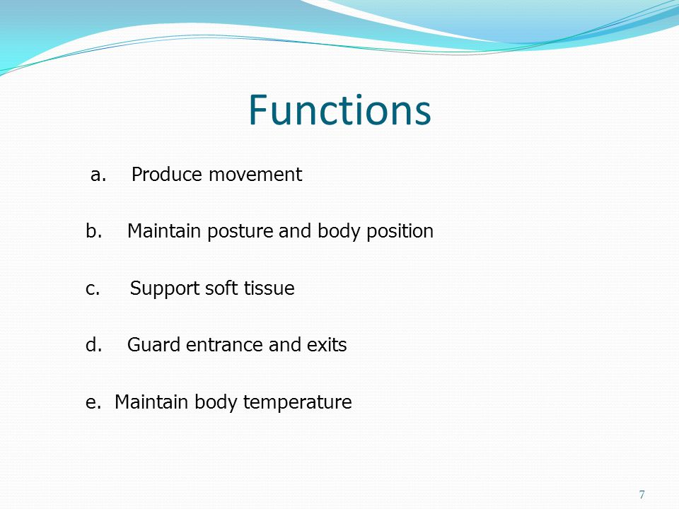 Functions a. Produce movement b. Maintain posture and body position