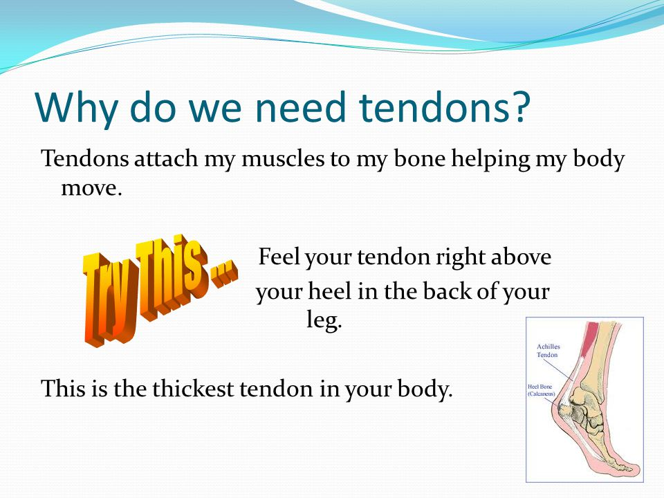 Why do we need tendons Try This ...