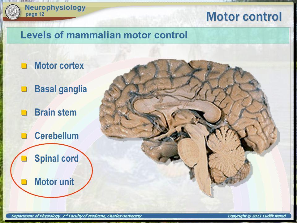 Motor control Levels of mammalian motor control Motor cortex