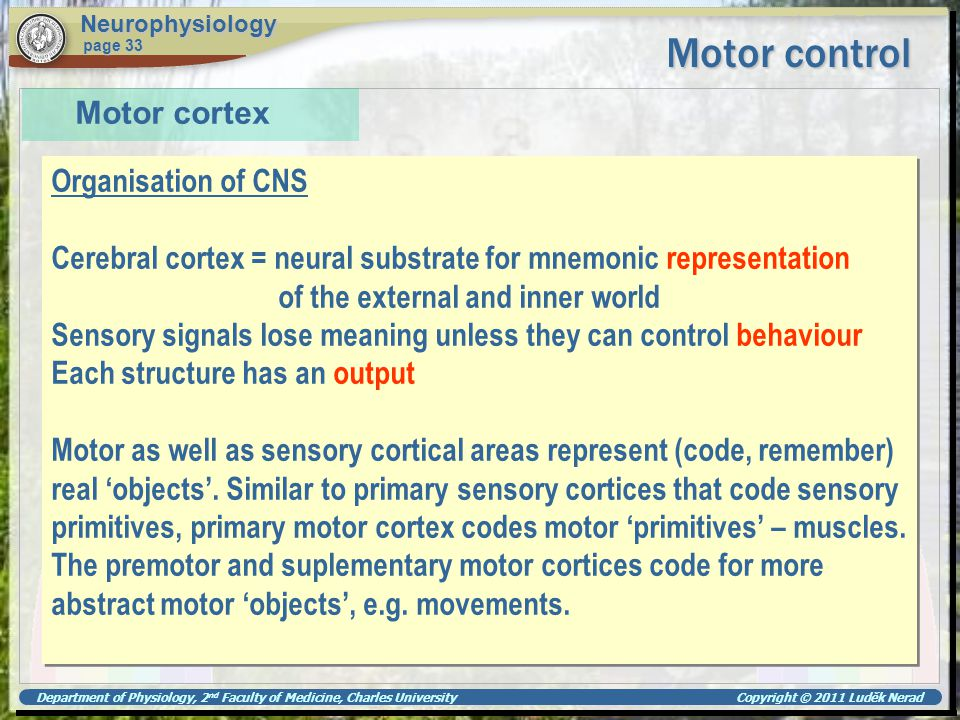 Motor control Motor cortex Organisation of CNS