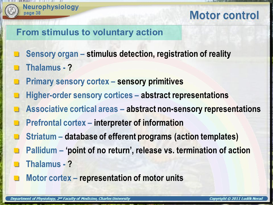 Motor control From stimulus to voluntary action