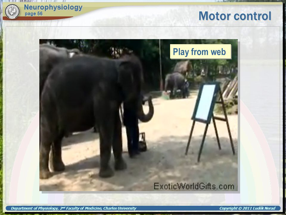 Motor control Play from web Neurophysiology page 56