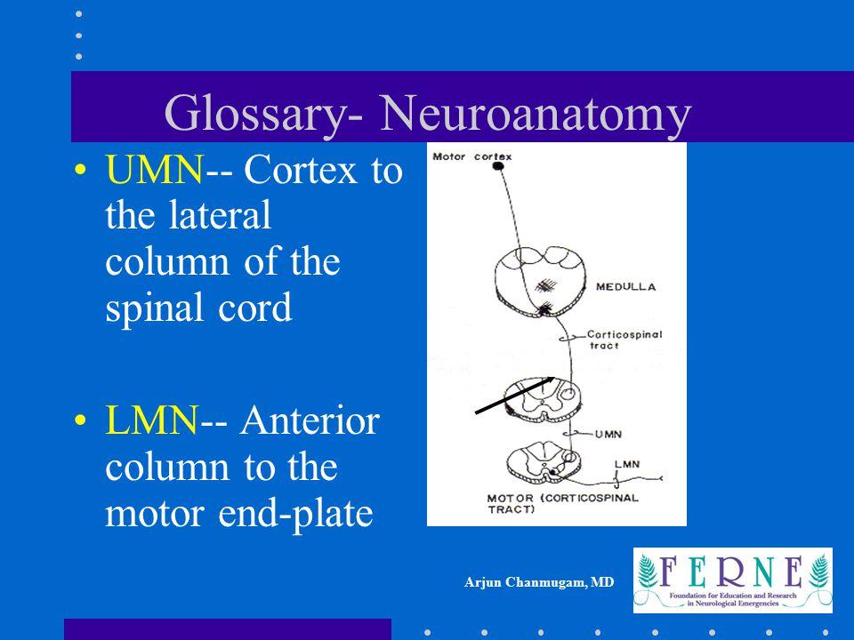 Glossary- Neuroanatomy