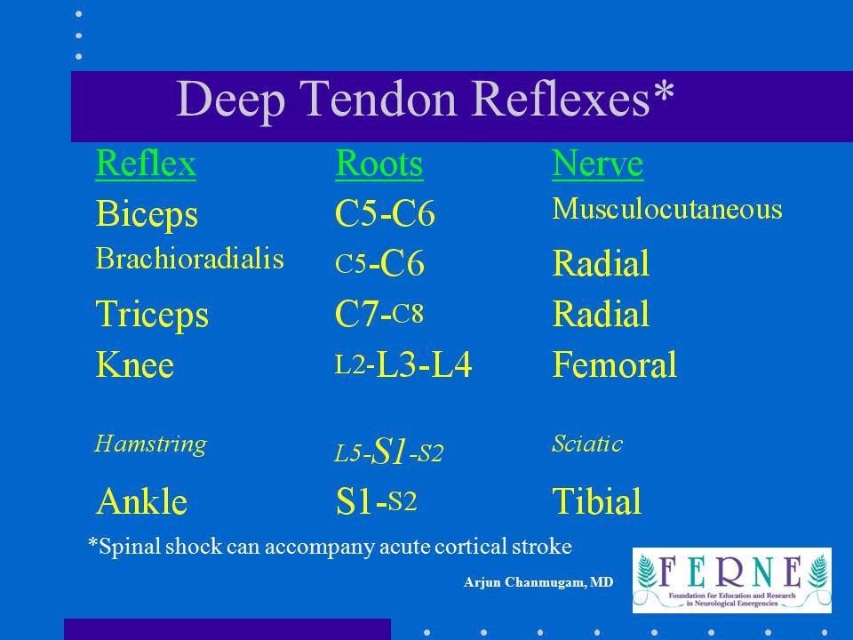 Deep Tendon Reflexes* *Spinal shock can accompany acute cortical stroke