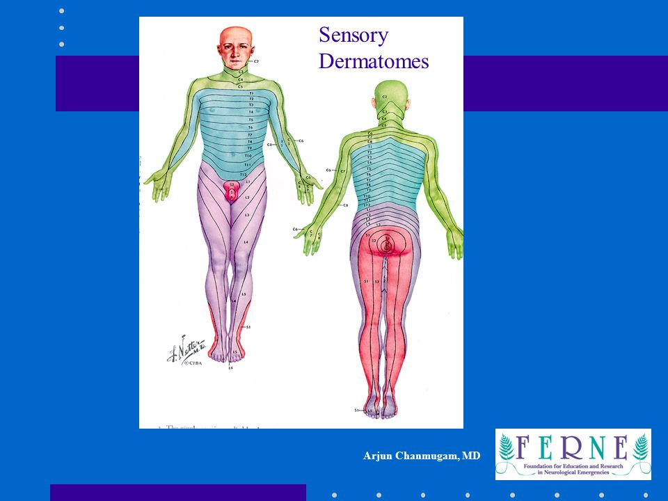 Sensory Dermatomes