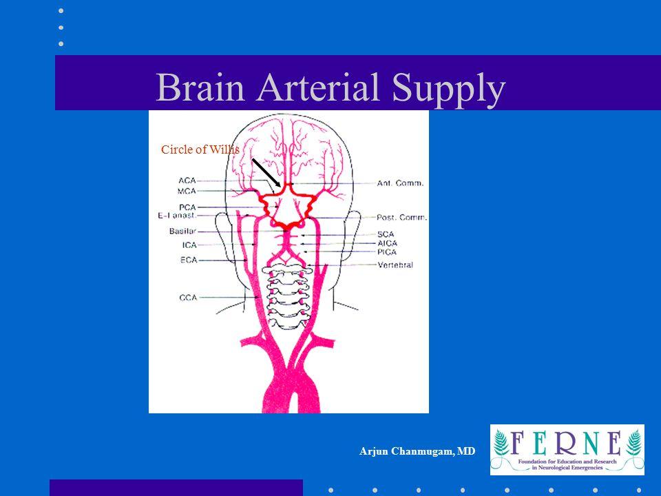 Brain Arterial Supply Circle of Willis
