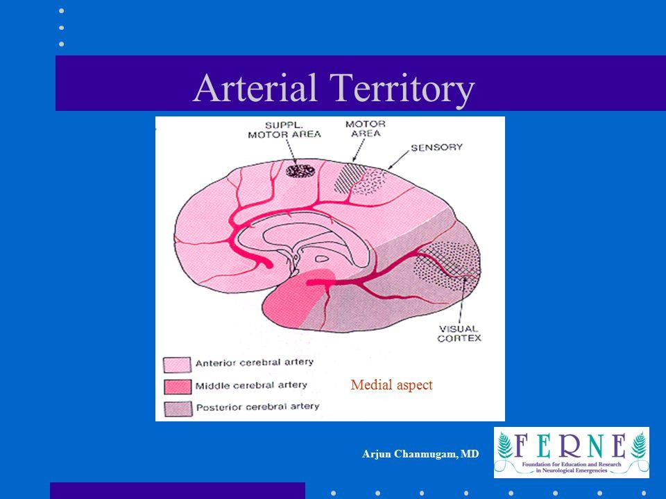 Arterial Territory Medial aspect