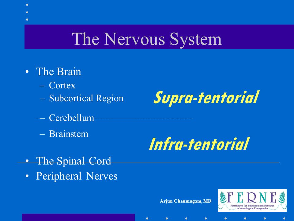 Supra-tentorial Infra-tentorial The Nervous System The Brain