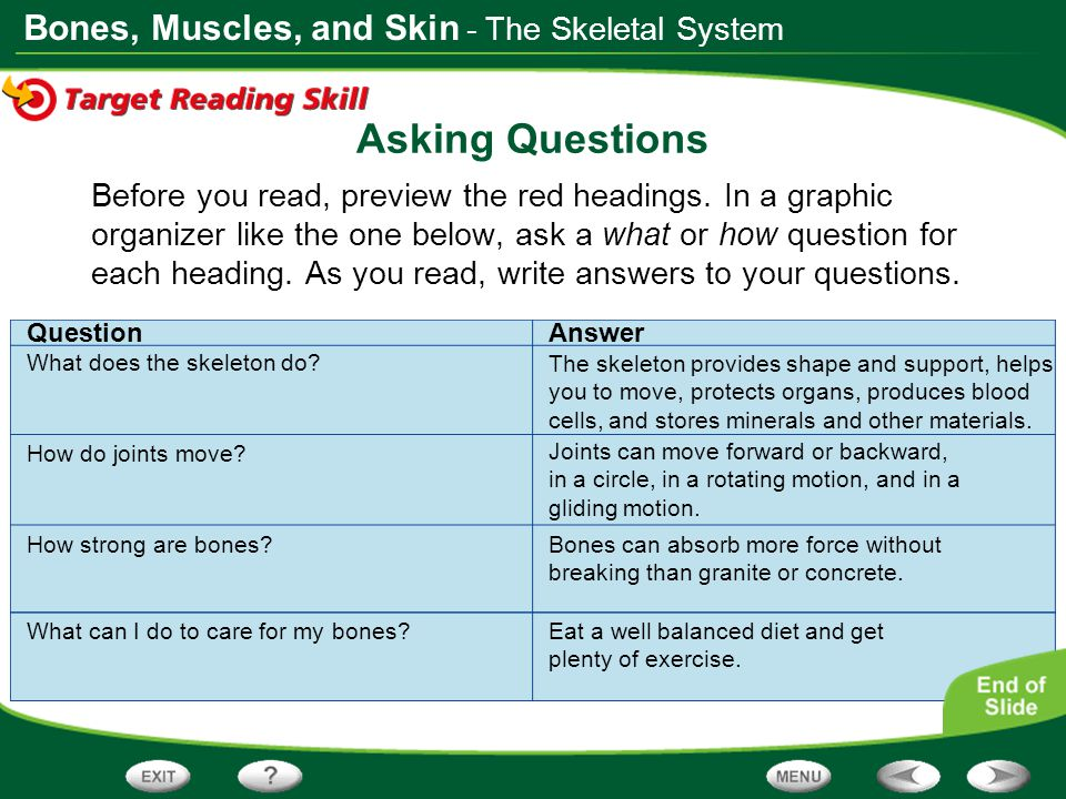 Asking Questions - The Skeletal System