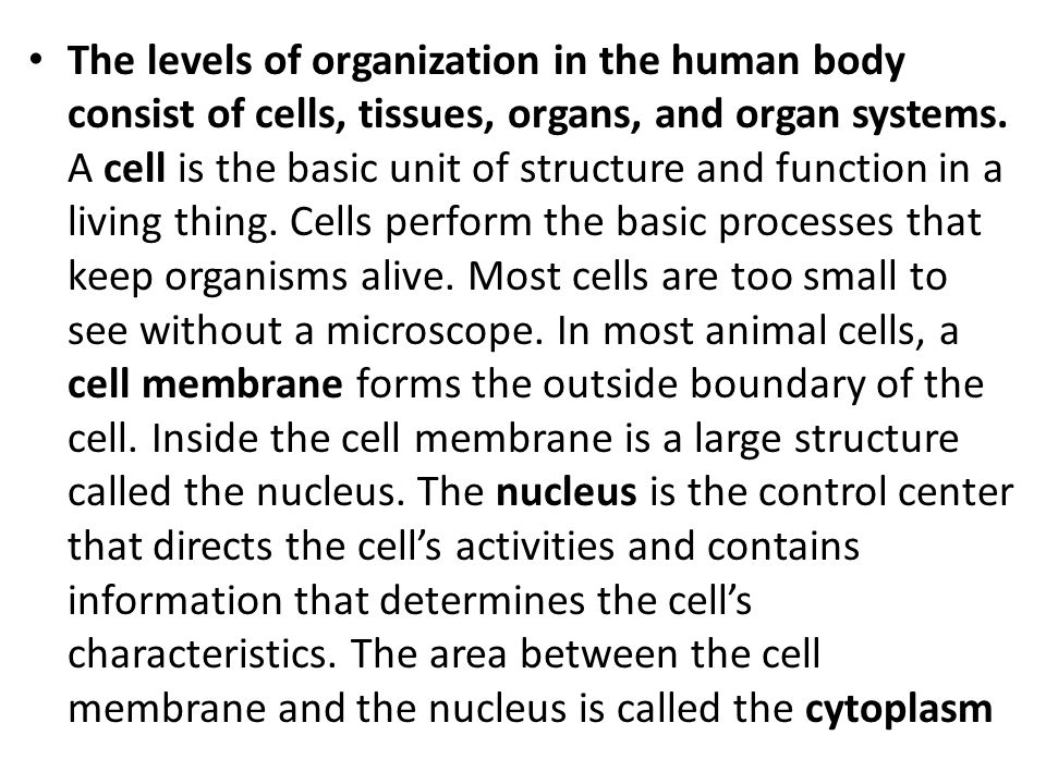 The levels of organization in the human body consist of cells, tissues, organs, and organ systems.