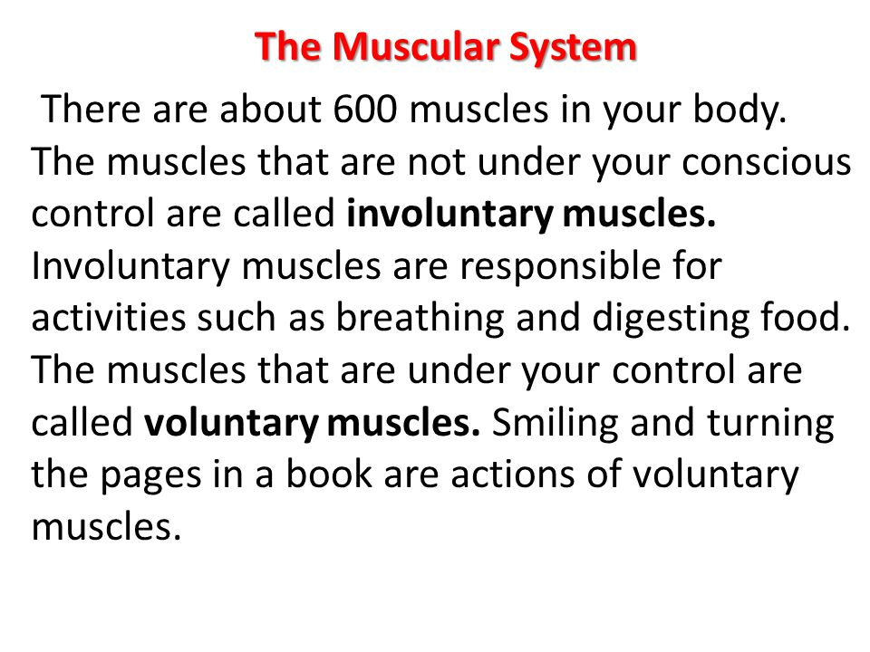 The Muscular System There are about 600 muscles in your body