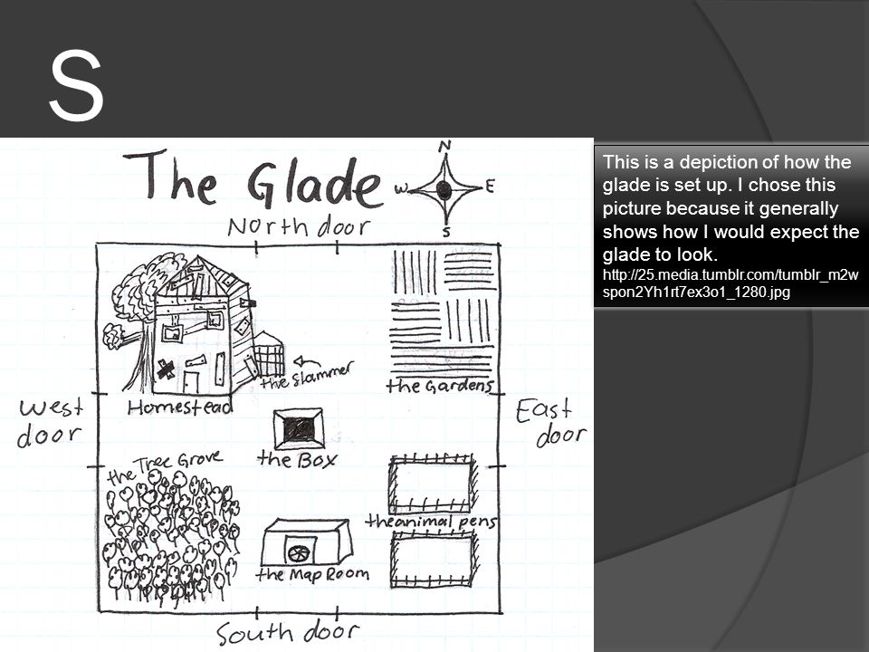 S This is a depiction of how the glade is set up. I chose this picture because it generally shows how I would expect the glade to look.