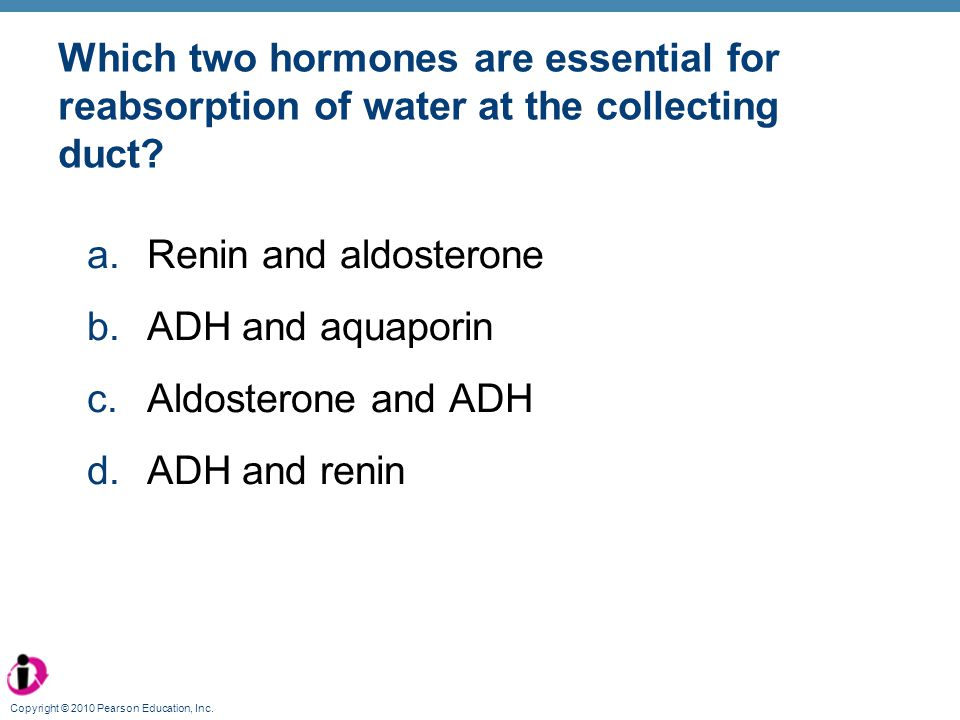 Which two hormones are essential for reabsorption of water at the collecting duct