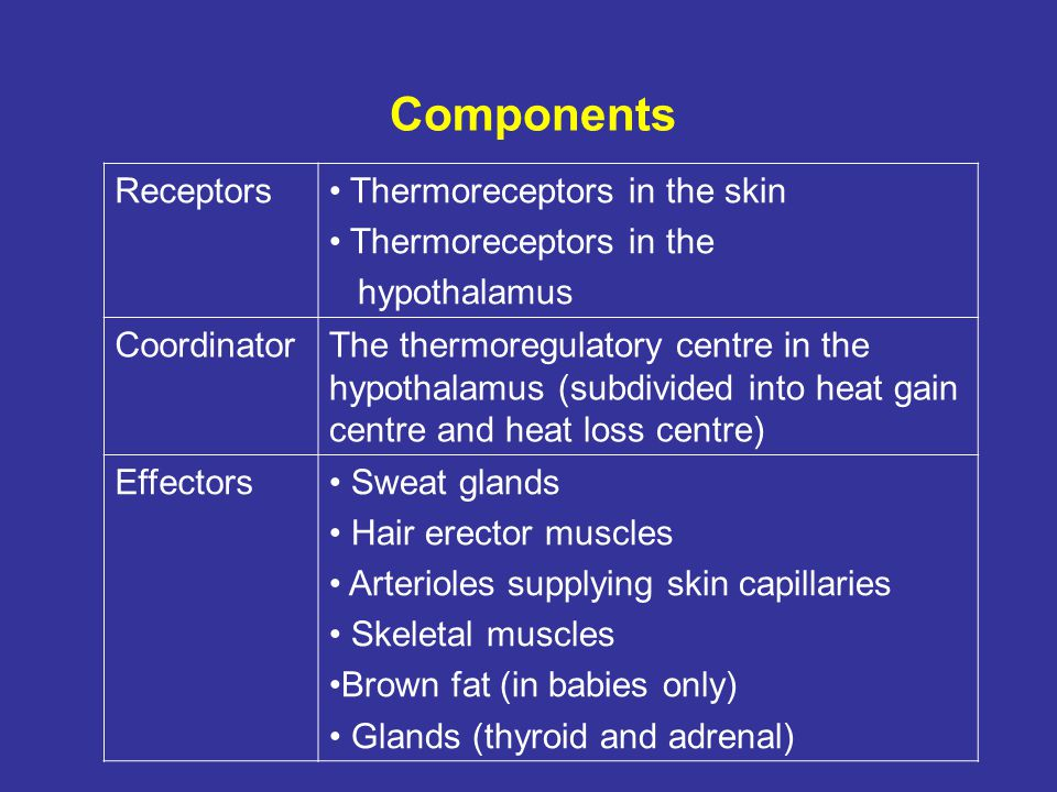 Components Receptors Thermoreceptors in the skin