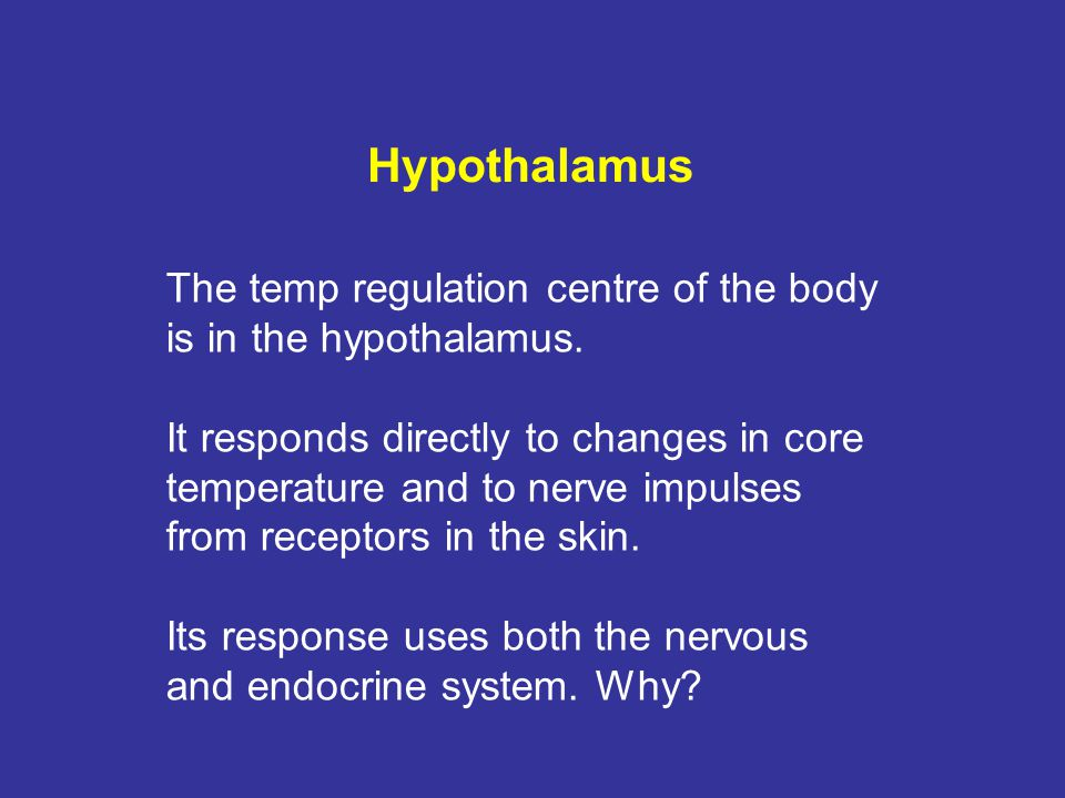Hypothalamus The temp regulation centre of the body is in the hypothalamus.