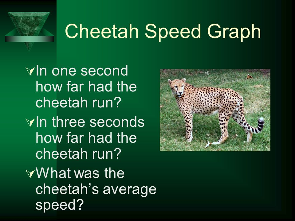 Cheetah Speed Graph In one second how far had the cheetah run