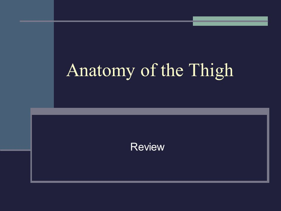 Anatomy of the Thigh Review