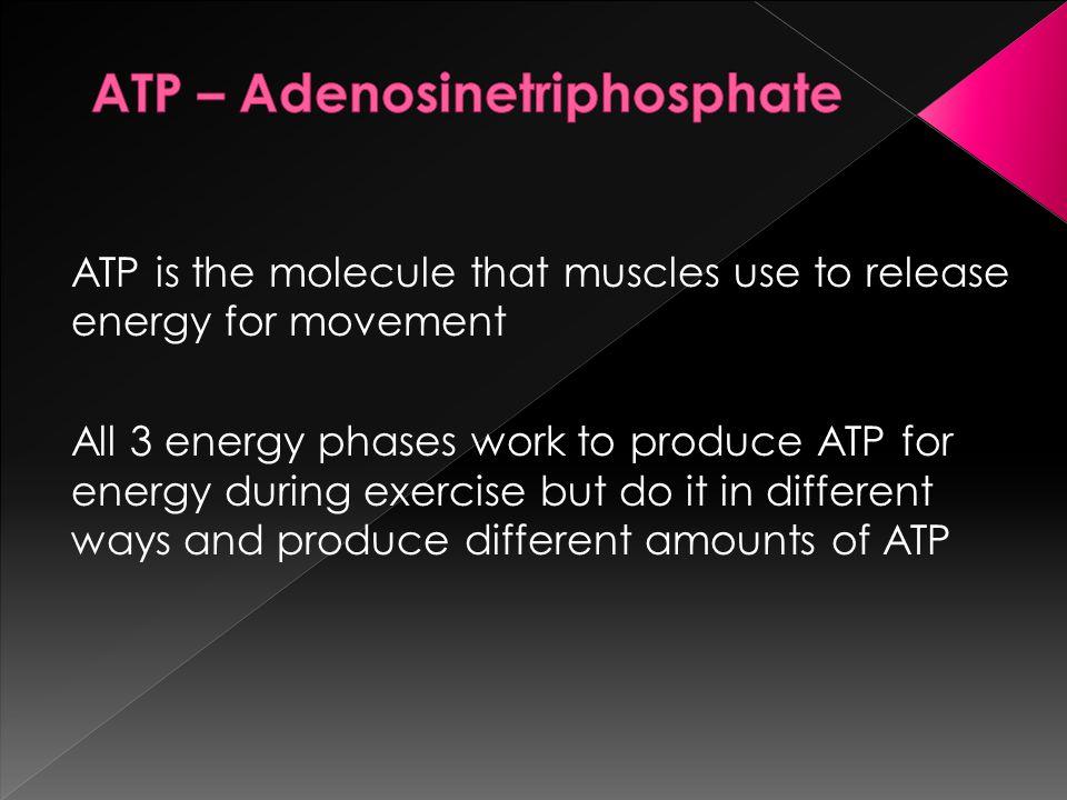ATP – Adenosinetriphosphate