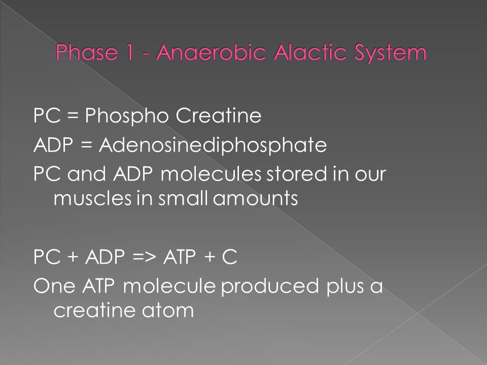 Phase 1 - Anaerobic Alactic System