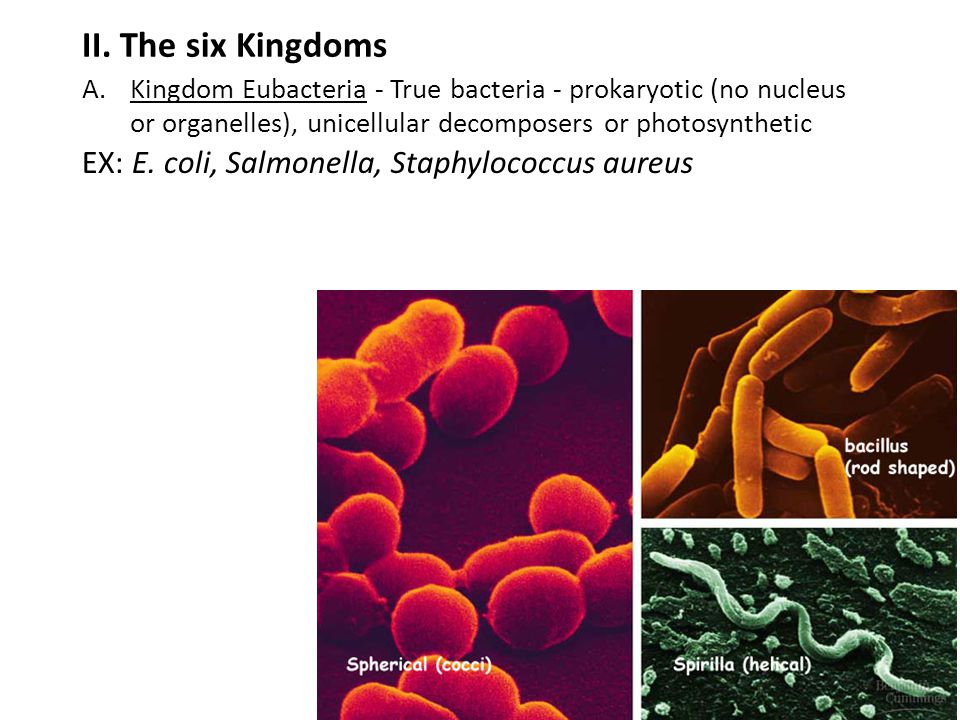 II. The six Kingdoms EX: E. coli, Salmonella, Staphylococcus aureus