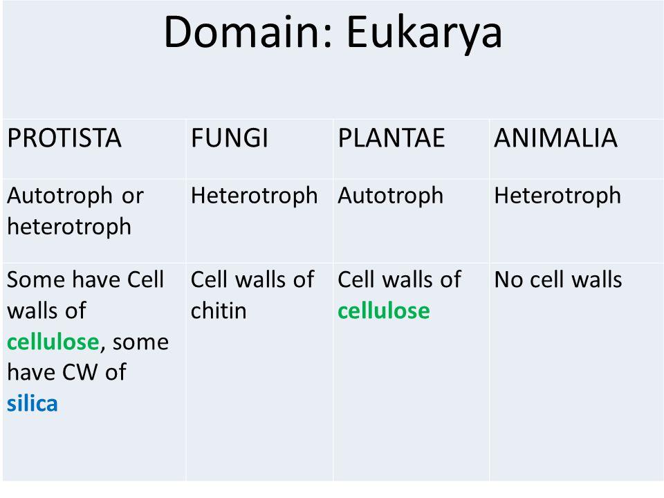 Domain: Eukarya PROTISTA FUNGI PLANTAE ANIMALIA