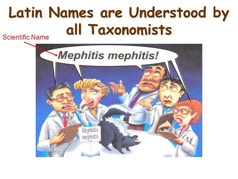 Latin Names are Understood by all Taxonomists