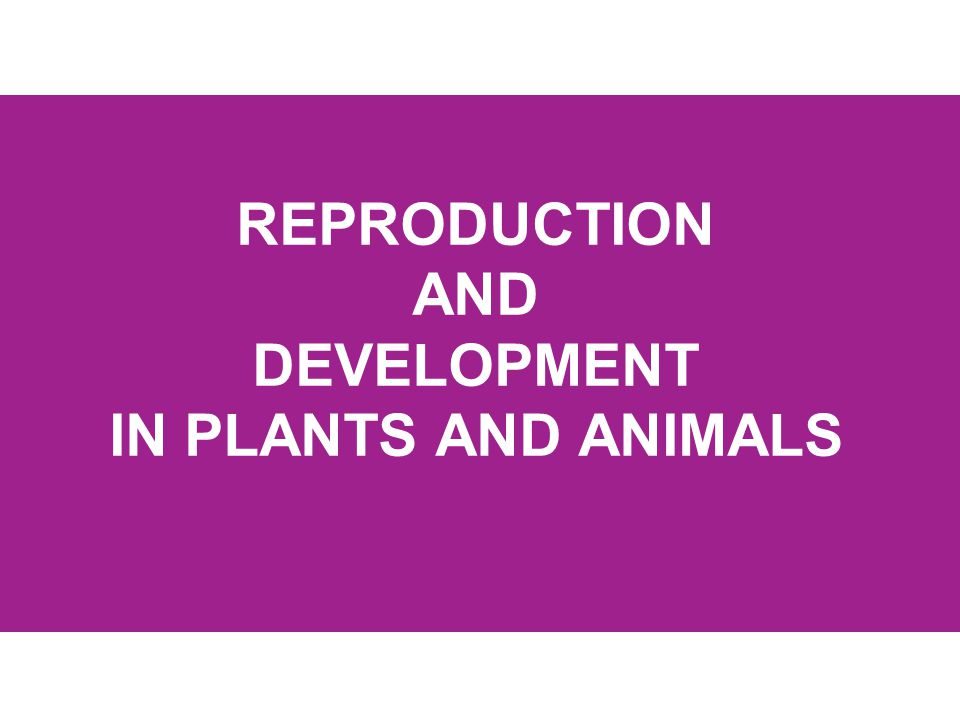 REPRODUCTION AND DEVELOPMENT IN PLANTS AND ANIMALS