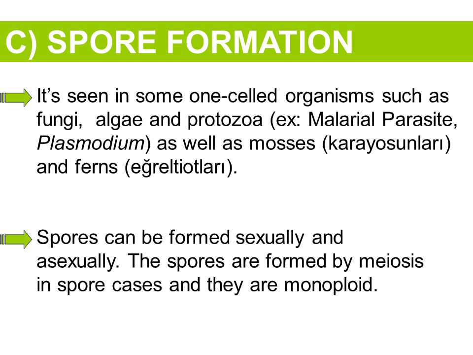 C) SPORE FORMATION