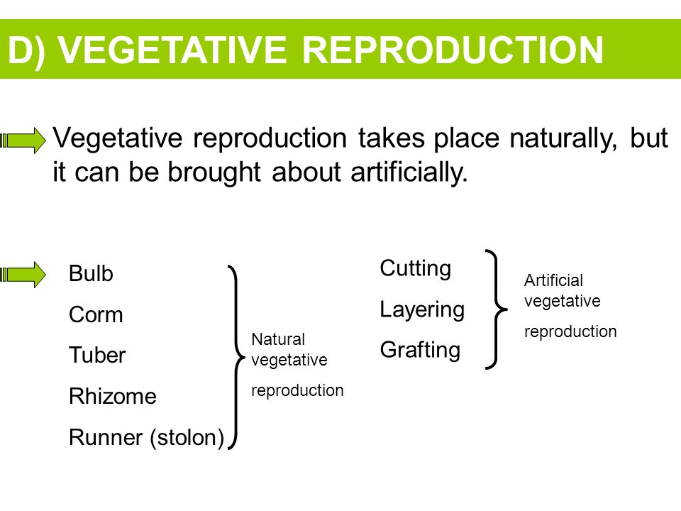 D) VEGETATIVE REPRODUCTION