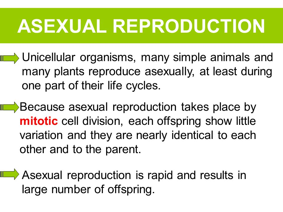 ASEXUAL REPRODUCTION Unicellular organisms, many simple animals and many plants reproduce asexually, at least during one part of their life cycles.