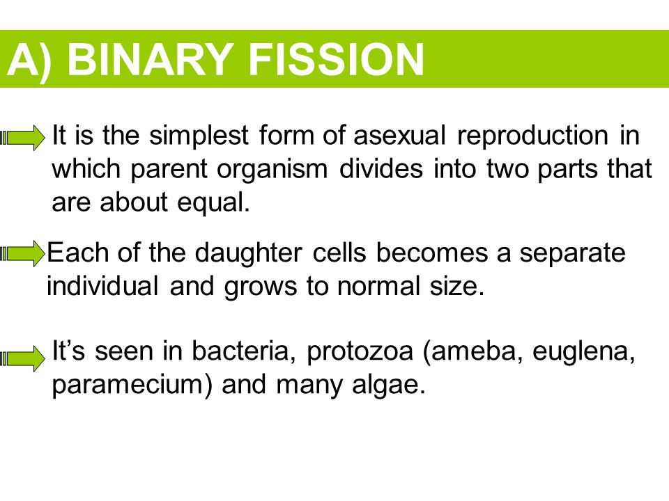 A) BINARY FISSION It is the simplest form of asexual reproduction in which parent organism divides into two parts that are about equal.