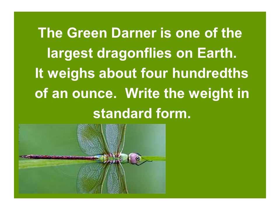 The Green Darner is one of the largest dragonflies on Earth.