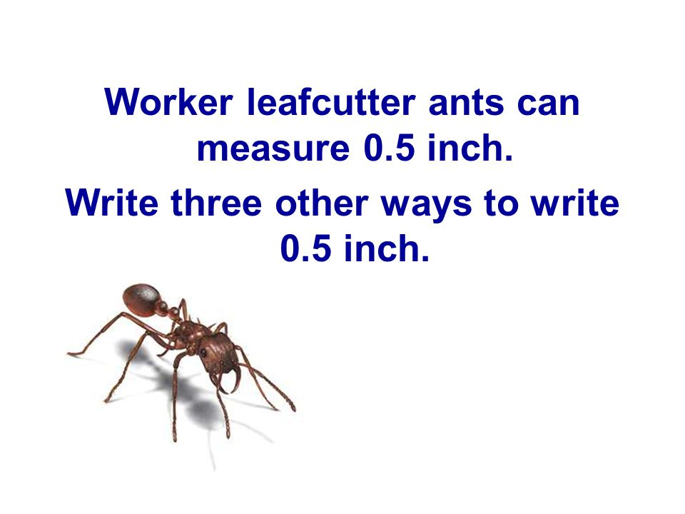Worker leafcutter ants can measure 0.5 inch.