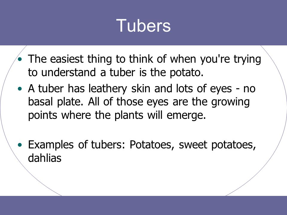 Tubers The easiest thing to think of when you re trying to understand a tuber is the potato.