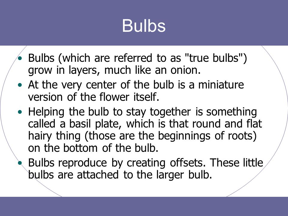 Bulbs Bulbs (which are referred to as true bulbs ) grow in layers, much like an onion.