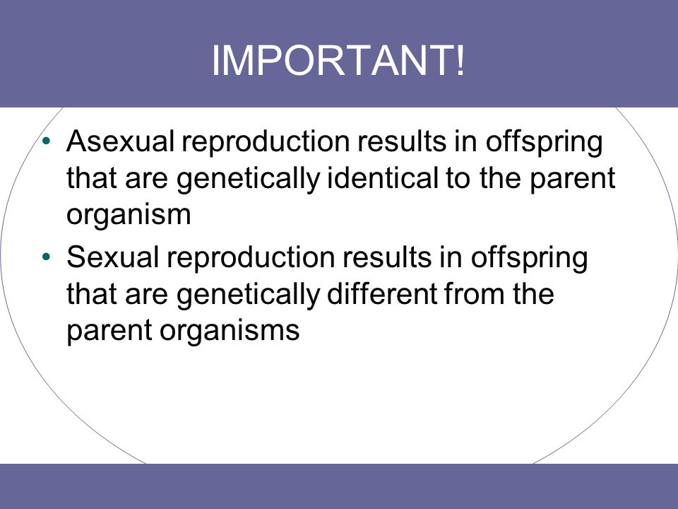 IMPORTANT! Asexual reproduction results in offspring that are genetically identical to the parent organism.