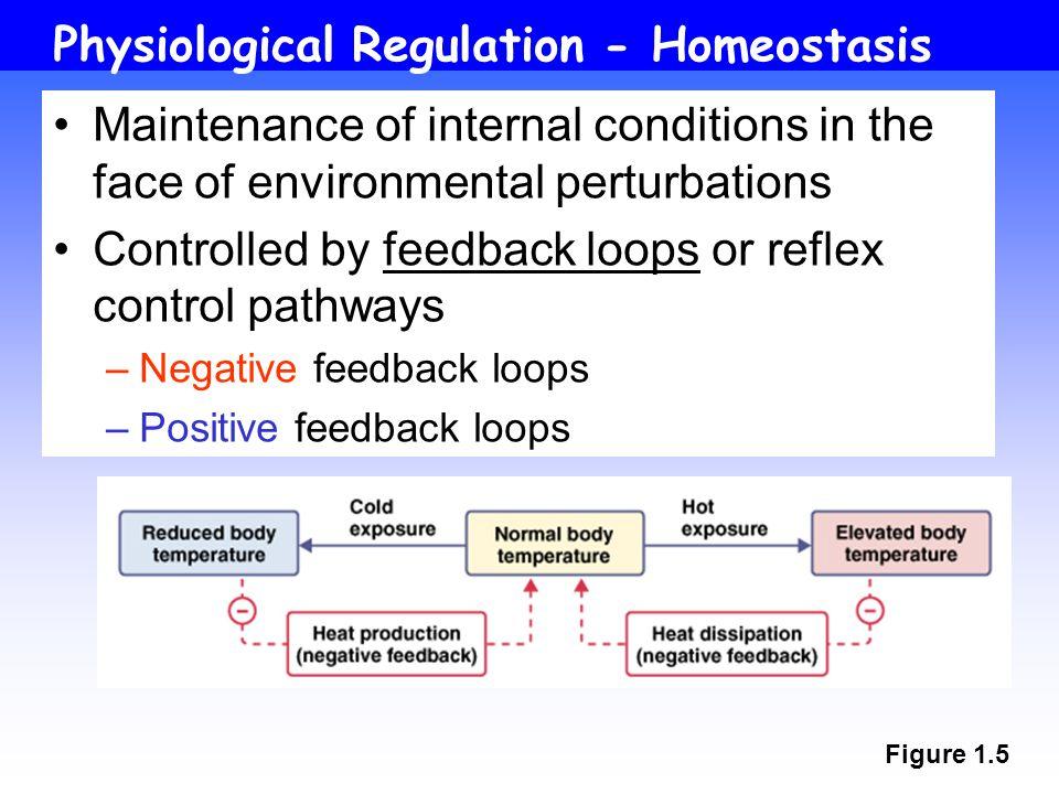 Physiological Regulation - Homeostasis