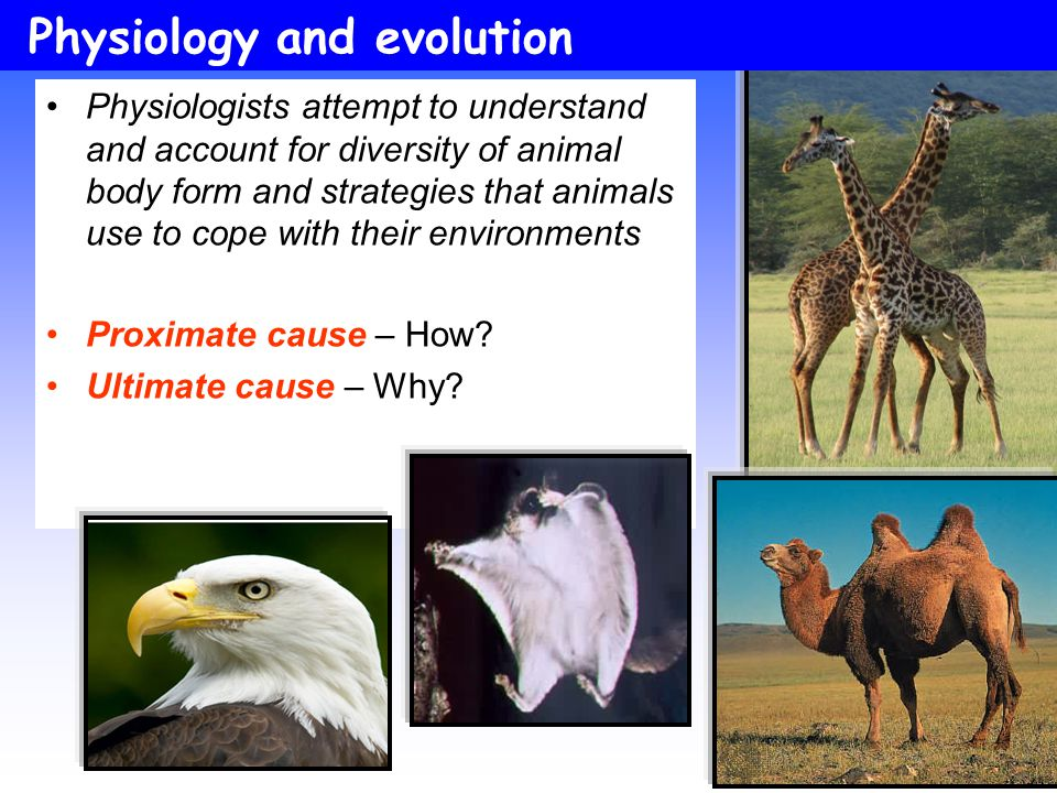 Physiology and evolution