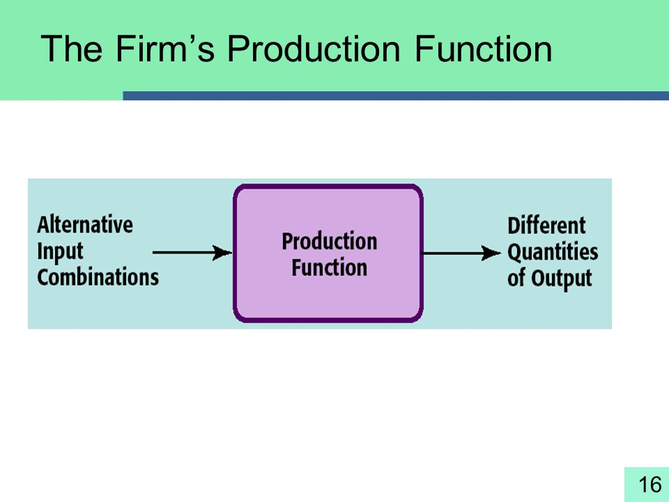The Firm's Production Function