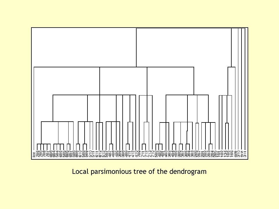 Local parsimonious tree of the dendrogram