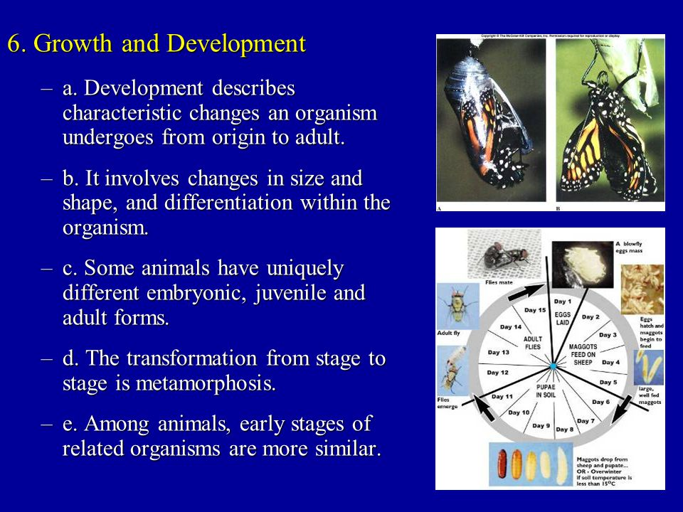 6. Growth and Development