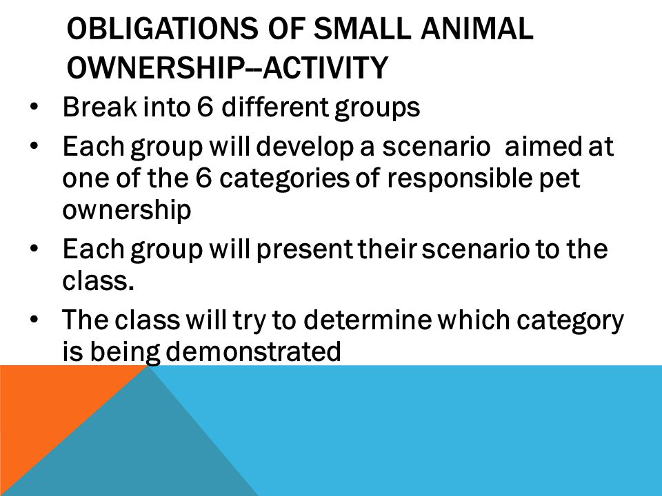 Obligations of Small animal Ownership--Activity