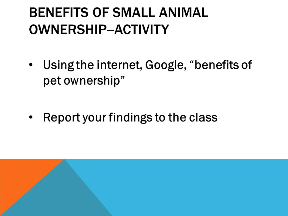 Benefits of Small Animal Ownership--Activity