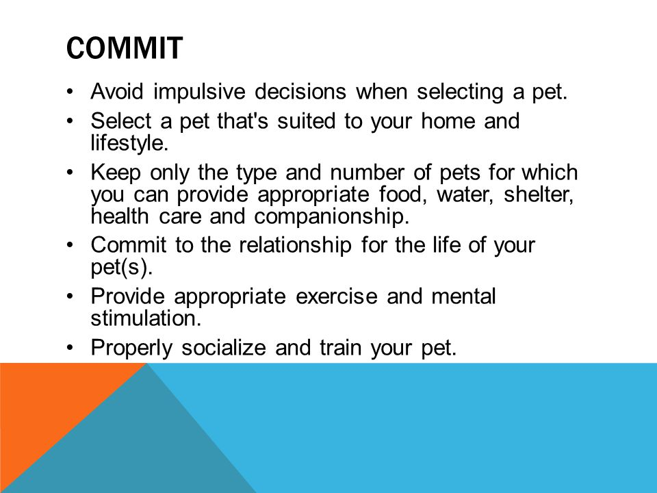 Commit Avoid impulsive decisions when selecting a pet.