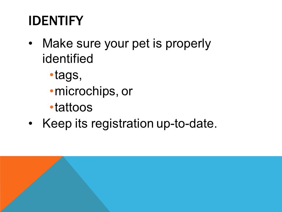 Identify Make sure your pet is properly identified tags,