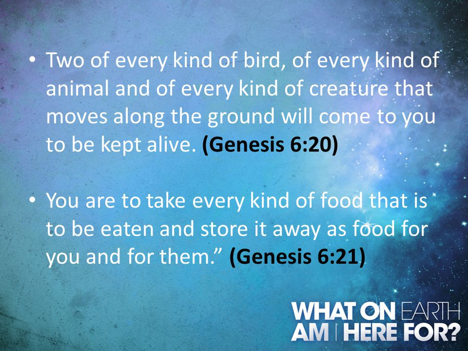 Two of every kind of bird, of every kind of animal and of every kind of creature that moves along the ground will come to you to be kept alive. (Genesis 6:20)