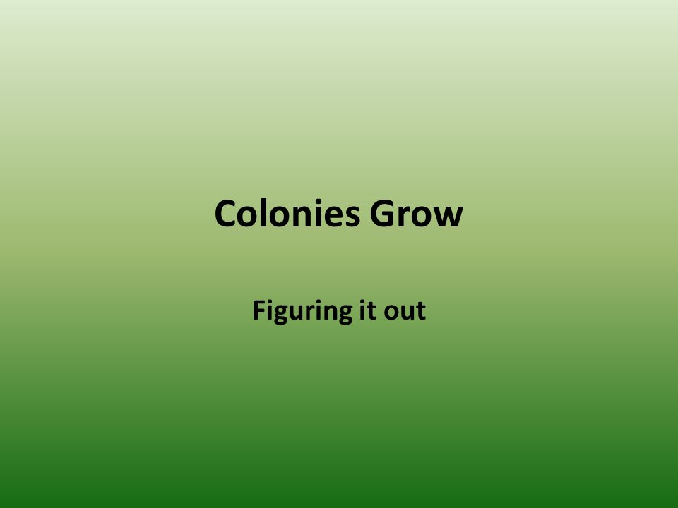 Colonies Grow Figuring it out