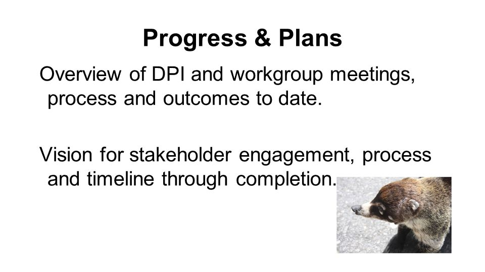 Progress & Plans Overview of DPI and workgroup meetings, process and outcomes to date.